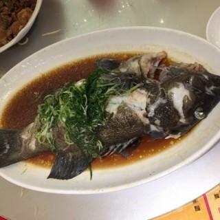 清蒸大東星斑 - 位於太子的海港酒家 (太子) | 香港